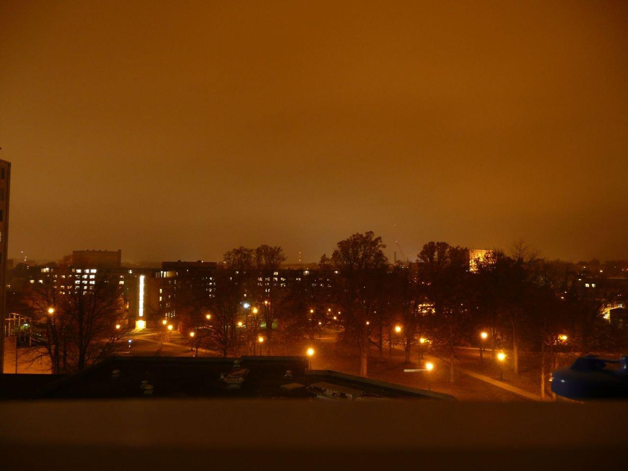 Vooral vleermuizen ondervinden hinder van de lichtvervuiling. (foto: Hendrik Moeremans)