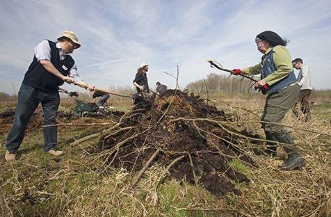 Rehabilitatie in uitvoering, zoeken naar eitjes van de ringslang in een broeihoop (foto: Jelger Herder)