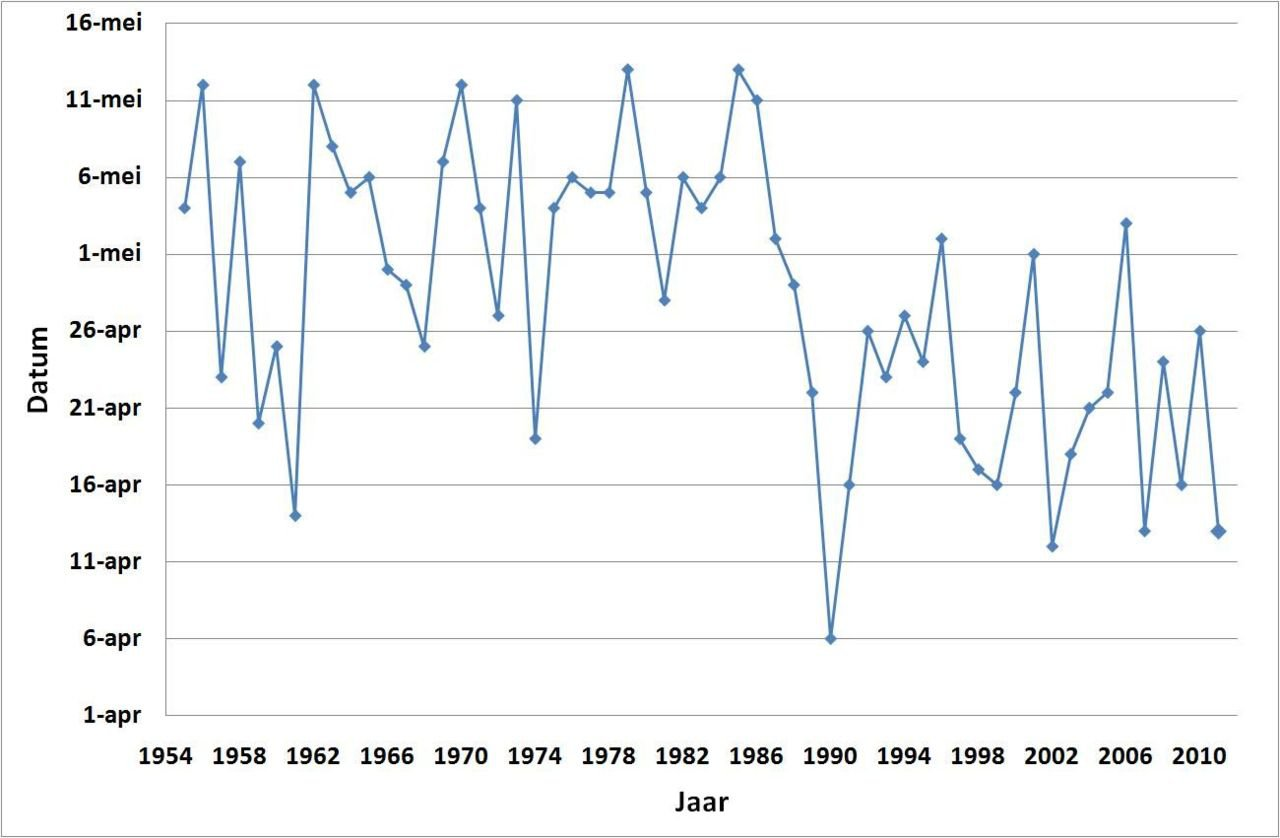Start bloei appelbomen in de periode 1955 tot en met 2011 (bron data: PPO Fruit)