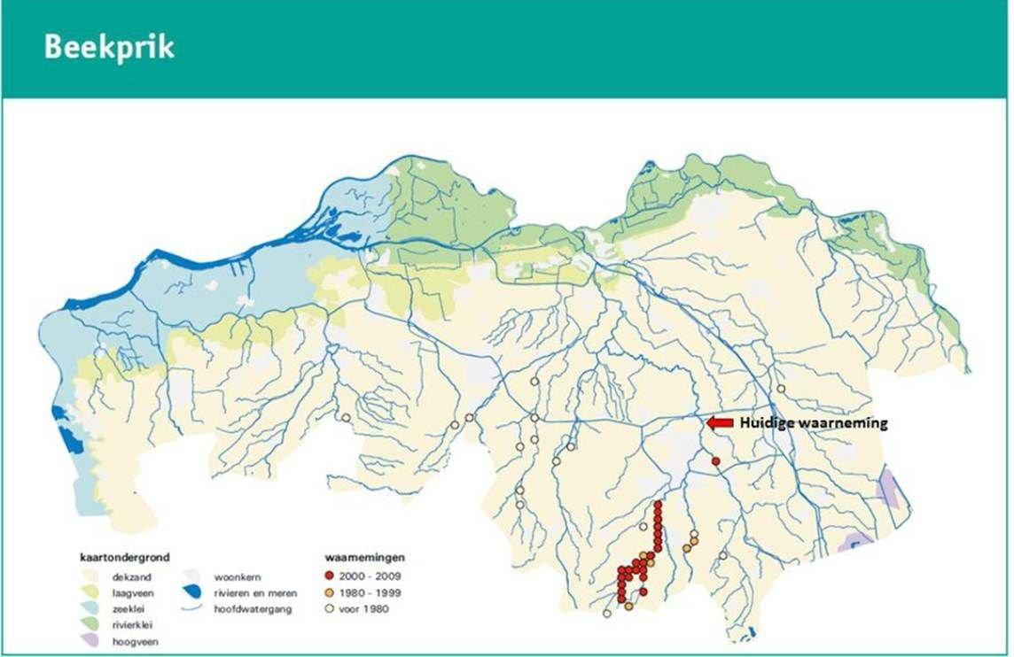 Beekprikken in Noord-Brabant (figuur: Waterschap De Dommel/ARCADIS)