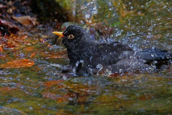 Zomerwarmte in de natuur ontdek de natuur - Foto in een bad ...