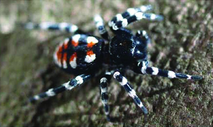 Een nieuw geslacht koepelspinnen werd naar muzikant Lou Reed genoemd, de Loureedia (foto: Martin Forman)