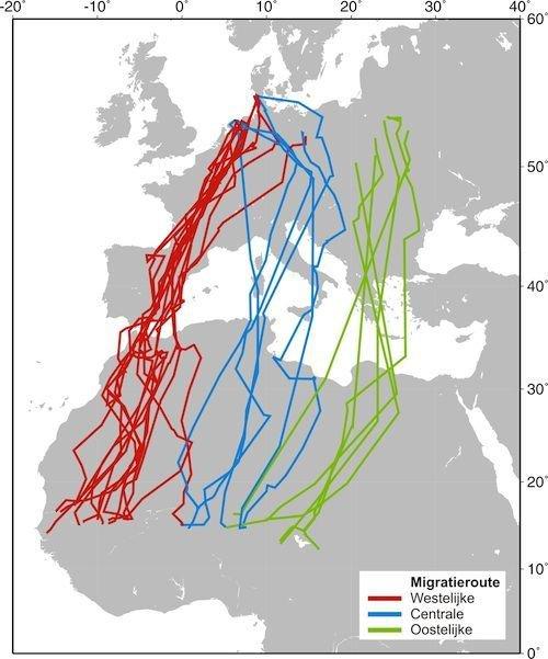 Montagu's harriers flyways to Africa