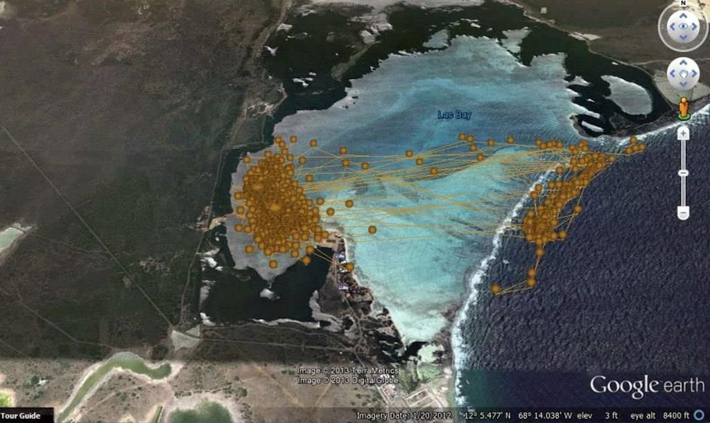 Uncleaned, preliminary data shows the migratory movements of one Hawksbill turtle in and out of Lac Bay, Bonaire, from January to July 2013 (photo: Google Earth Pro - DigitalGlobe)
