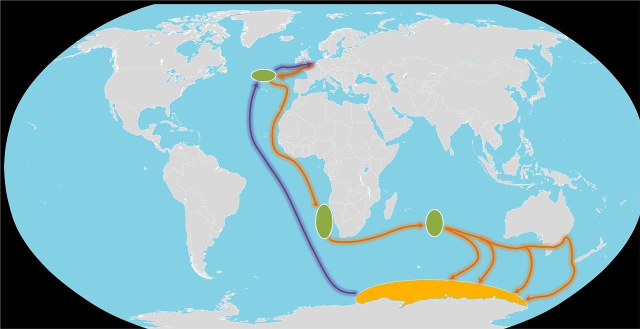 Noordse Sterns zijn de absolute toppers als het op vliegafstand aankomt. (kaart: Vogelbescherming Nederland)