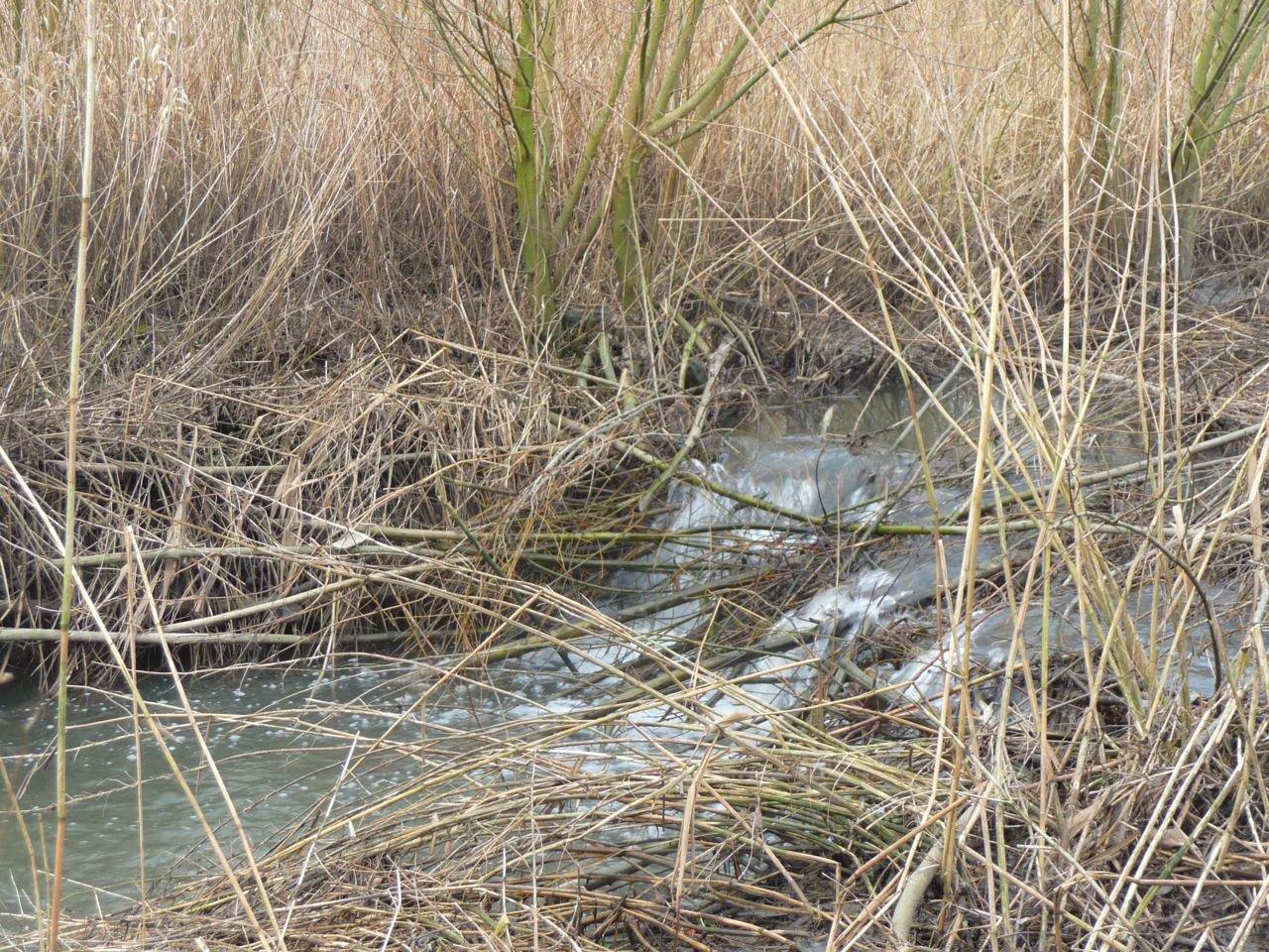 Beverdam in het wachtbekken. Deze beperkte waterstandverhoging levert momenteel geen problemen op.(foto: Daan Stemgee)
