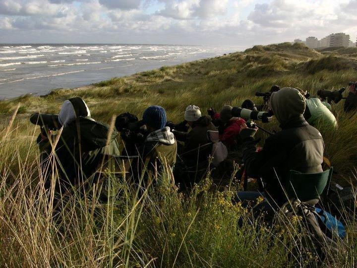 Trektellers op post in De Panne op 8 oktober: V-Day voor Rotganzentrek (foto: David 'Billy' Herman)