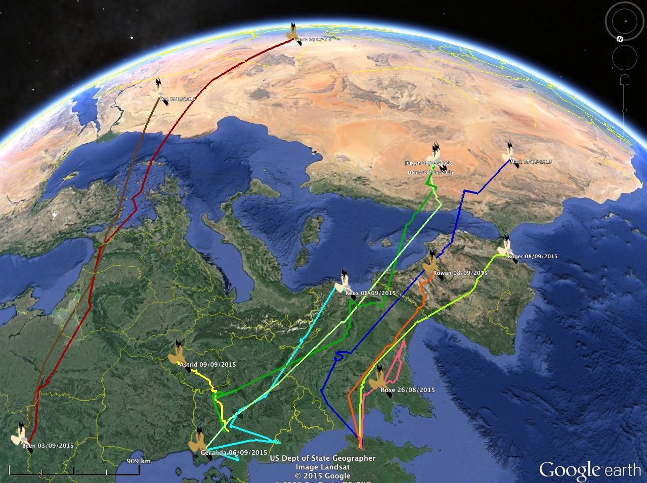 Nature today grauwe kiekendieven op trek naar afrika - Kaart evenwicht tussen werk en ...