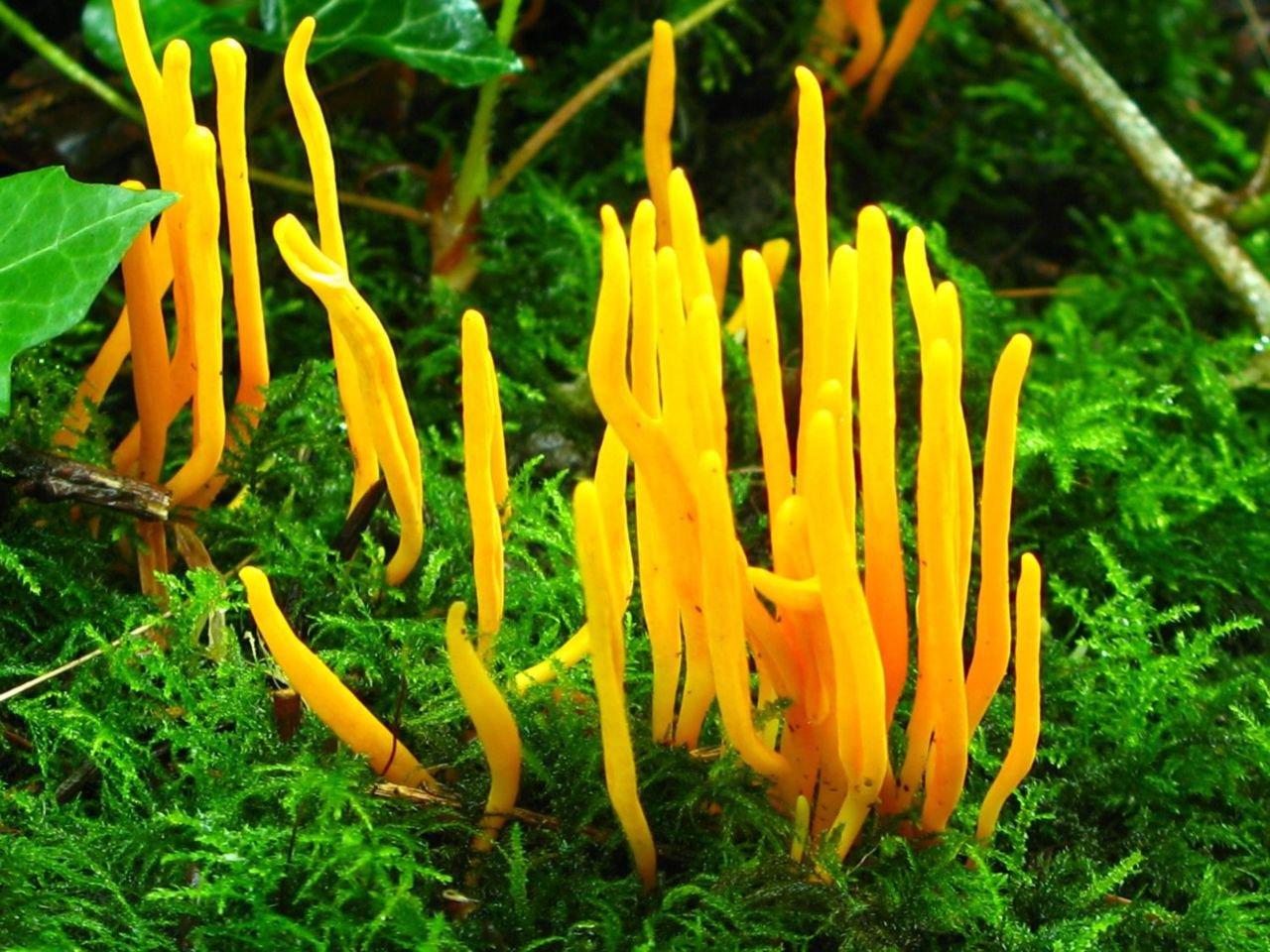 Sommige knotszwamsoorten komen ook wel in bossen voor (foto: Martijn Oud)