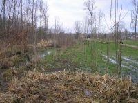 Vooral jonge essen op waterrijke gronden zijn vatbaar voor de essenziekte (foto: Wim Sauwens)