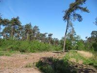 Twee jaar na de inrichtingswerken werd al eiafzet van de Bruine eikenpage vastgesteld in deze zone (foto: Ilf Jacobs)