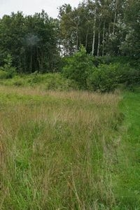 Open graslandje in het Kuinderbos (foto: Kars Veling)