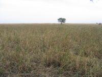 Het belangrijkste overwinteringsgebied van de Waterrietzanger, Djoudj Nationaal Park in Senegal (foto: Norbert Roothaert)