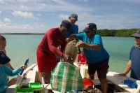 STCB Weighing a Turtle with Nature Managers from Saba, St. Maarten and St. Eustatius (foto: STCB-Bonaire)