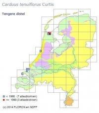 Verspreiding van Tengere distel in Nederland voor en na 1990 (foto: FLORON en NDFF)