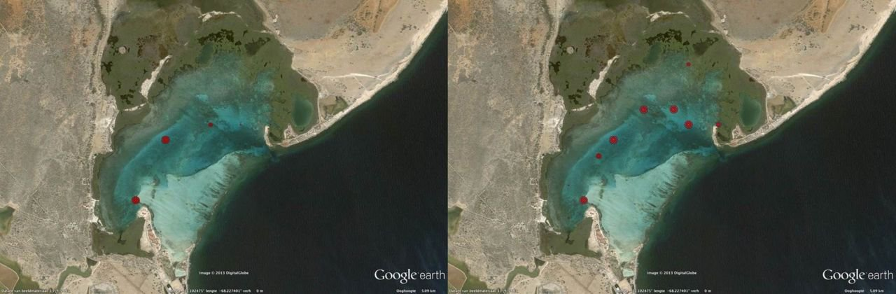 Expansion of invasive seagrass Halophila stipulacea from 2011 (left) to 2013 (right). Relative size of red dots represents abundance. (figure:  Google Earth Pro - DigitalGlobe)